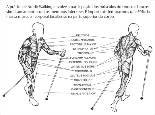Músculos do Nordic Walking